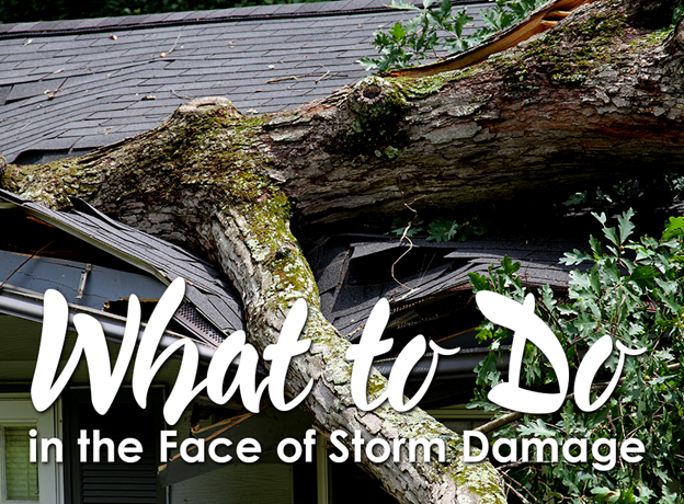 What To Do In The Face Of Storm Damage